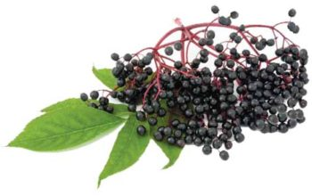 Elderberry Elixir Recipe–keep colds and flu away naturally.