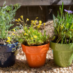 Top Tips for Brightening up your Garden