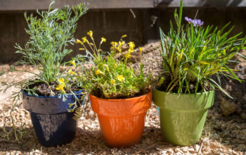 Top Tips for Brightening up your Garden